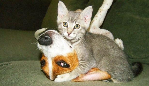 gatti-e-cani-divertenti